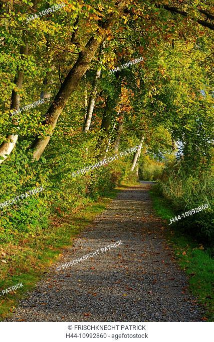 Forest way, Switzerland