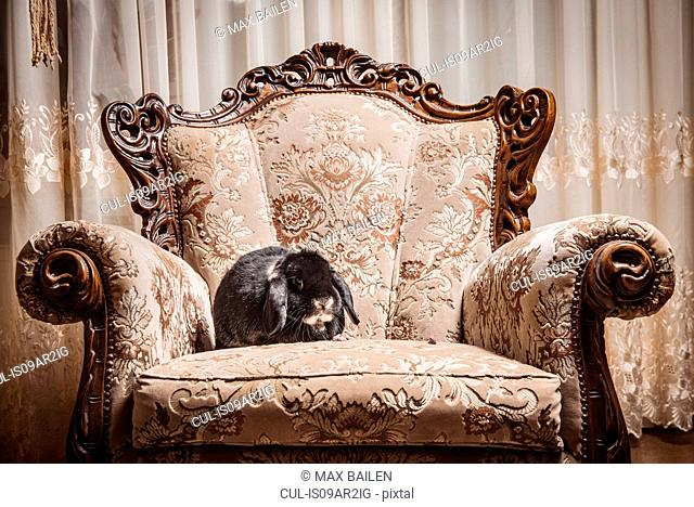 Portrait of rabbit sitting on ornate chair