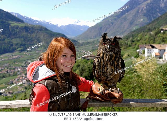 Girl with a Eurasian eagle-owl (Bubo bubo) on her arm, birds of prey show at Schloss Tyrol castle, Tyrol village, Burggrafenamt, Province of South Tyrol, Italy