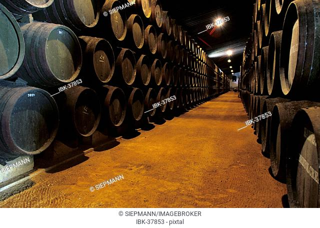 Wine cellar Bodega Harveys Jerez de la Frontera Andalusia Province Cadiz Spain