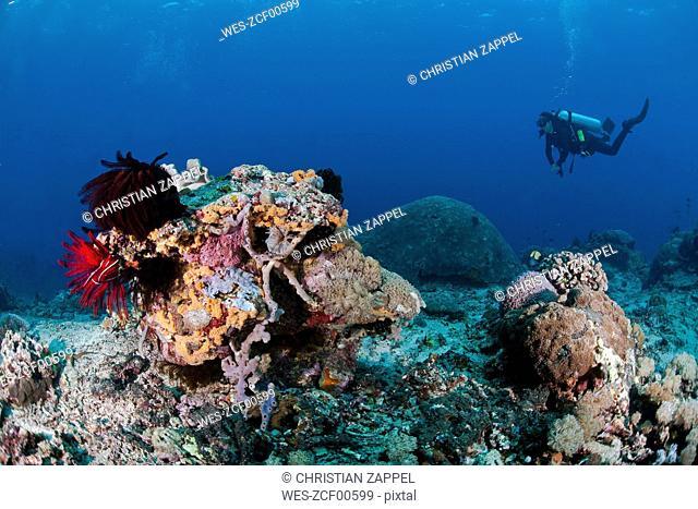 Indonesia, Bali, Nusa Lembonga, Nusa Penida, female diver at coral reef