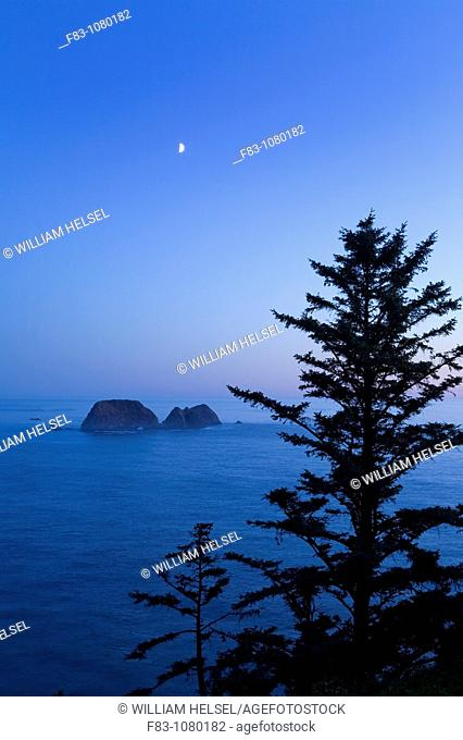 USA, Oregon, Tillamook County, Cape Meares State Park, sea stacks in Pacific ocean off Cape Meares, sitka spruce trees Picea sitchensis, setting moon at dusk