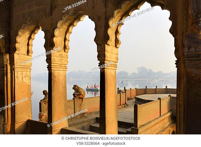 India, Uttar Pradesh, Mathura, Contemplative monkeys on the banks of the Yamuna