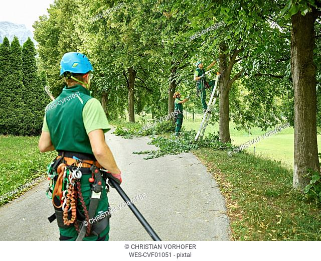 Tree cutters pruning of trees