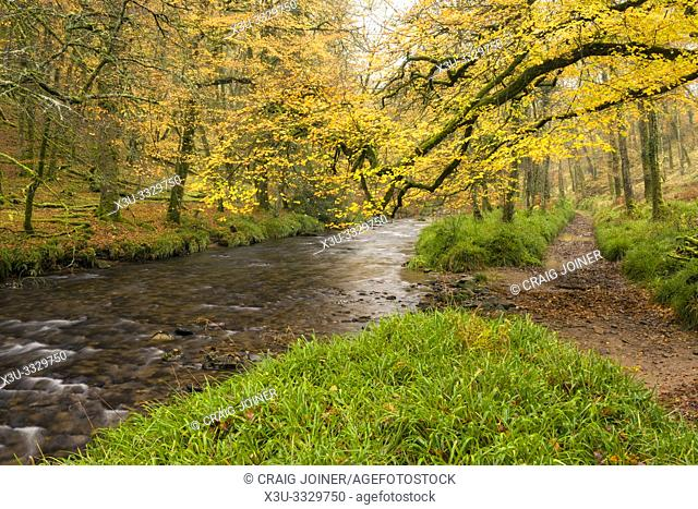 Autumn colour at Dane's Brook in Buckminster Wood in Exmoor National Park near Dulverton, Somerset, England