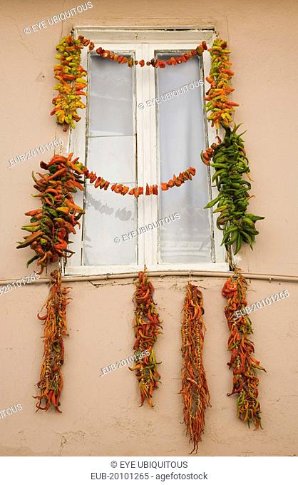 Strings of red green and orange chili peppers strung up to dry in summer sunshine from the window frame of house in old town