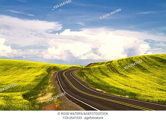 Rural highway through a canola field in the Palouse, eastern Washington, USA