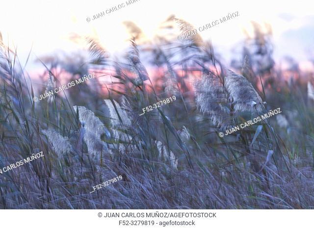 Wetland at sunset, Danube Delta, UNESCO WORLD HERITAGE, Tulcea County, Romania, Europe