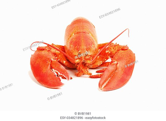 Close up of a cooked lobster isolated on white