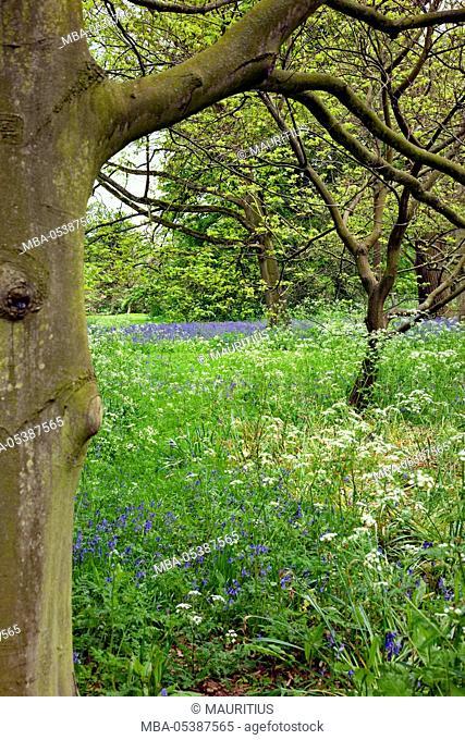 Tree, park, garden, spring
