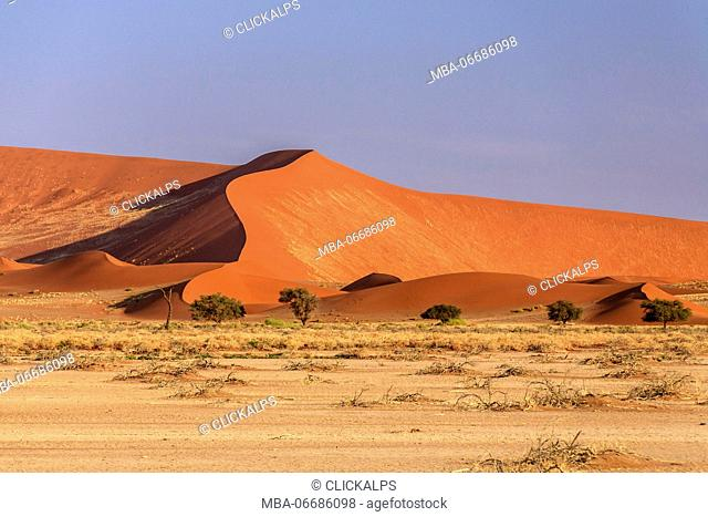 Dry plants and Dead Acacia surrounded by sandy dunes Deadvlei Sossusvlei Namib Desert Naukluft National Park Namibia Africa