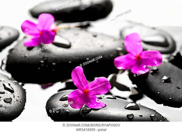 Grey wet pebbles with flowers background