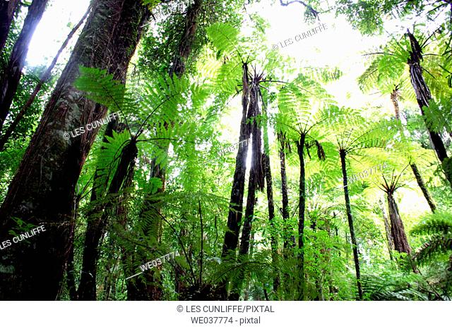 Pirongia Forest Park,New Zealand