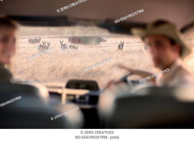 People looking at wildlife through windscreen, Stellenbosch, South Africa