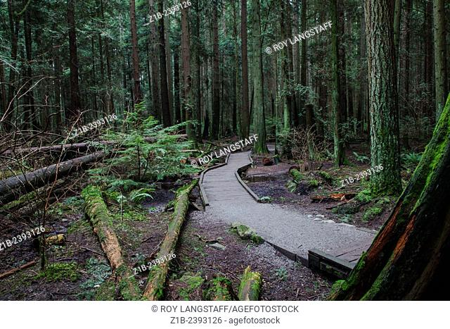 An elevated trail through a marshy area of a temperate rain forest near Vancouver