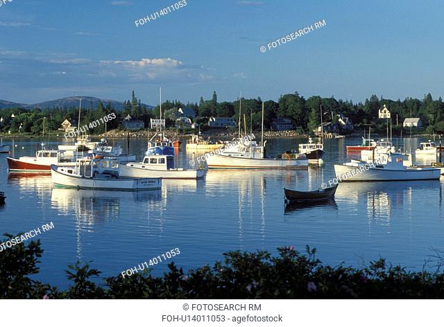 lobster boats, Bass Harbor, Mount Desert Island, ME, Maine, View of lobster fishing boats buoyed in the harbor in the fishing village of Bass Harbor on the...