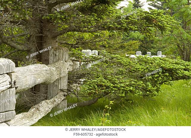 Trees, Wooden Fence, Carvers Gap, TN-NC