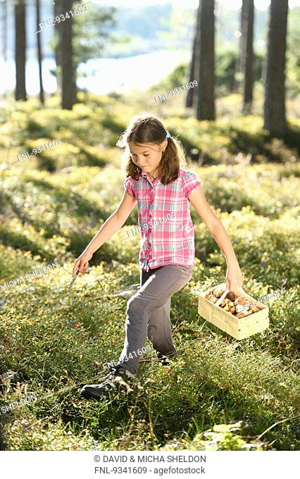 Girl collecting mushrooms in a pine forest