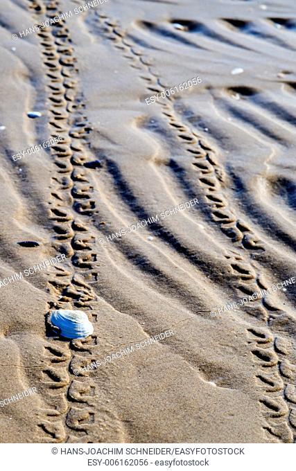 Beach with tracks
