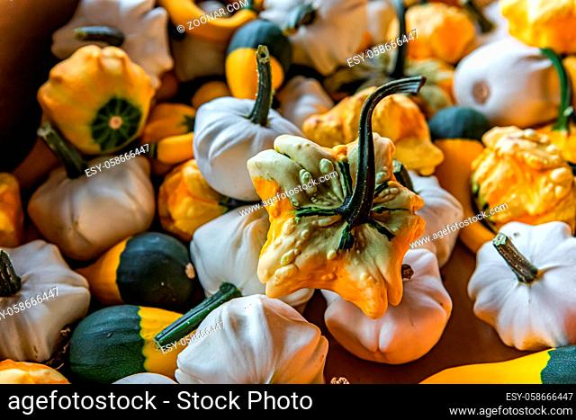 Close up of a small decorative pumpkins. Weird shapes, white and orange e and green peels, green stems. Full frame for wallpaper use or background