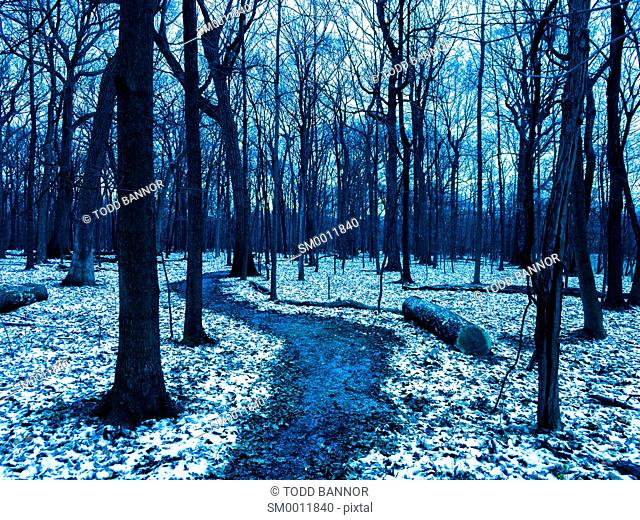 Wooded path with first snow of the winter