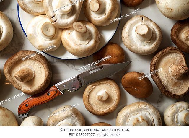 Mushrooms on a marble table
