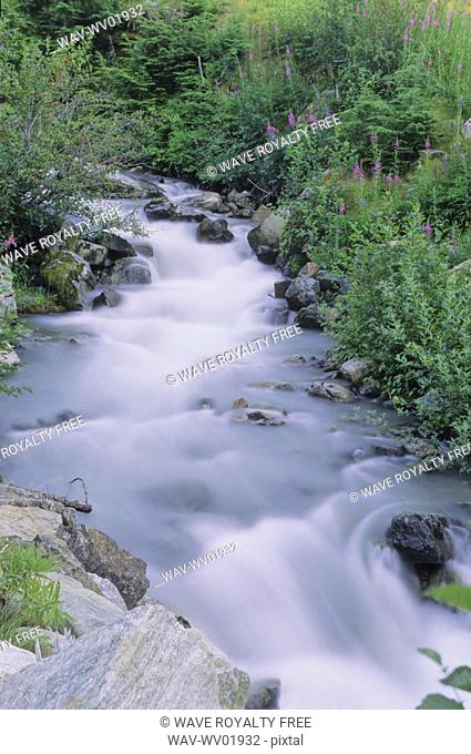 Mountain stream with fireweed and trees, Whistler, BC Canada
