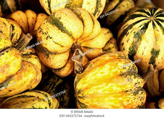 Collection of yellow and green gourds in a wooden basket