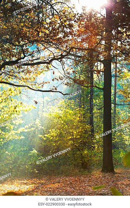 sun light lits lawn in autumn forest