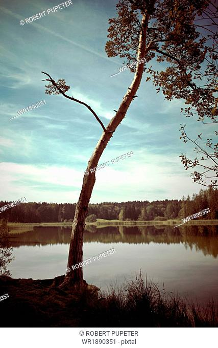Tree On Lake, Bavaria, Germany, Europe