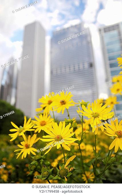 Flowers in Grant Park, skyscrapers in the background, Chicago, Illinois