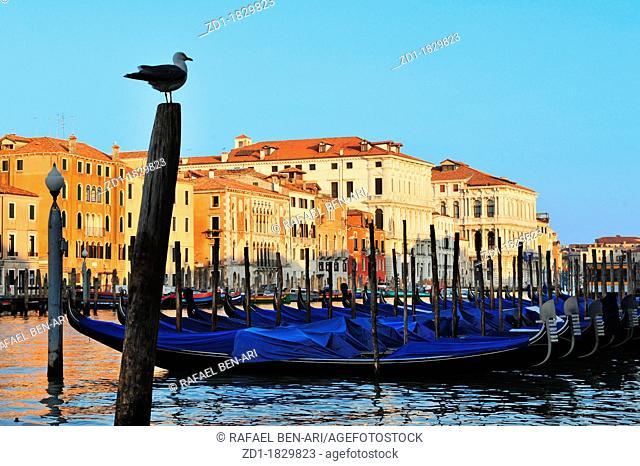 Gondolas mooring in the Grand Canal in Venice