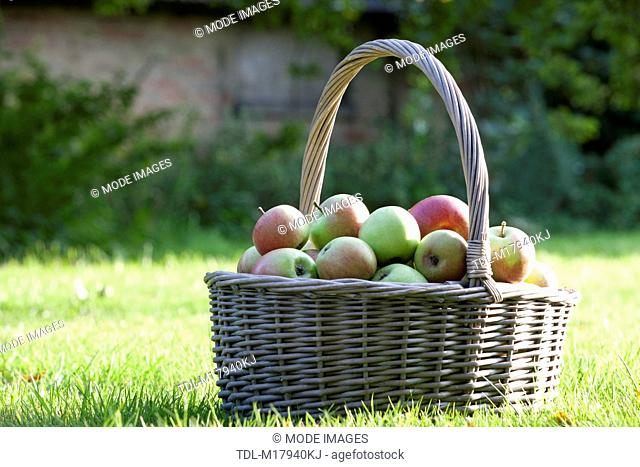 A basket of apples on the grass