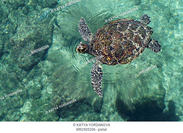 A Mexican Turtle