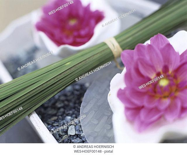 Pink dahlias and bunch of grass on tray