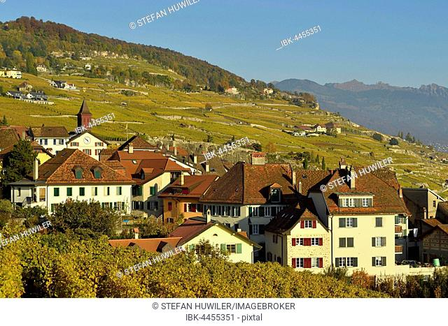 Vineyards in autumn with wine growing village of Rivaz, Lavaux, Canton of Vaud, Switzerland