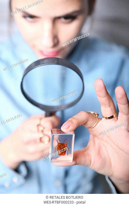 Woman looking at preparation of Tessaratoma papillosa with with magnifying glass