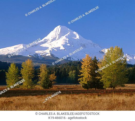 Mt. Hood from Upper Hood River Valley. Hood River County. Oregon. USA