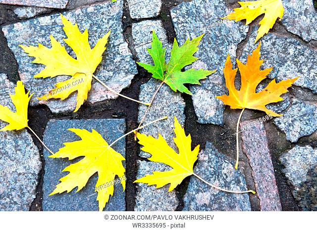 Colorful red, orange and green autumn leaves on the stone pattern. Fall background
