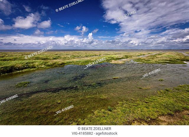 Submerged salt marsh - Hamburger Hallig, Schleswig-Holstein, Germany, 23/06/2013