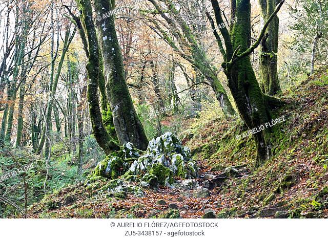 Located on the north face of Sierra del Sueve, and just four kilometers from the Cantabrian Sea, the Biescona forest has the hallmark of being the beech at the...