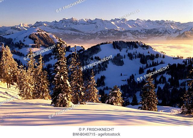 view from Rigi Kulm (5906 ft) on Glarner Alps, in evening light, Switzerland, Berner Alpen, Rigi Kulm