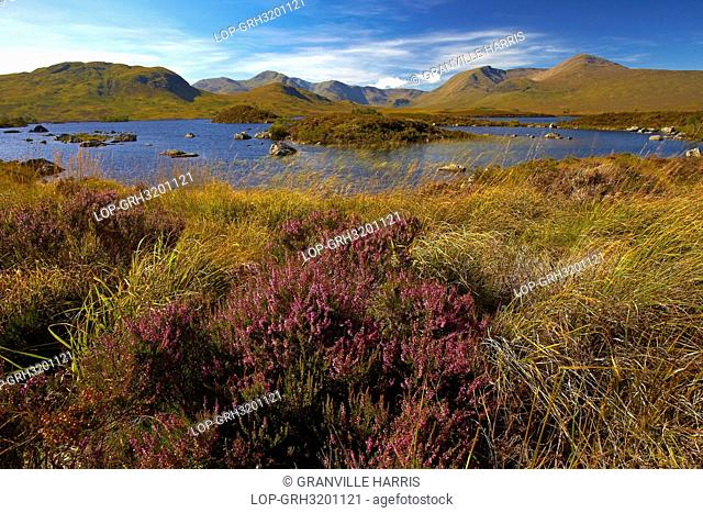 Scotland, Highland, Rannoch Moor. Loch Ba on Rannoch Moor with the Black Mount mountain range in the distance
