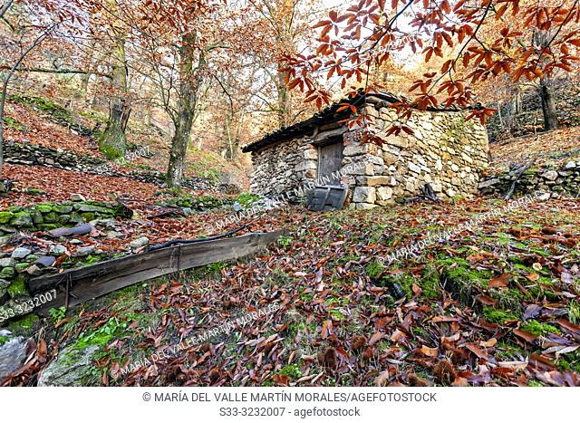 Rural house between chestnuts on autumn time. Sierra de Gredos. Casillas. Avila. Spain. Europe