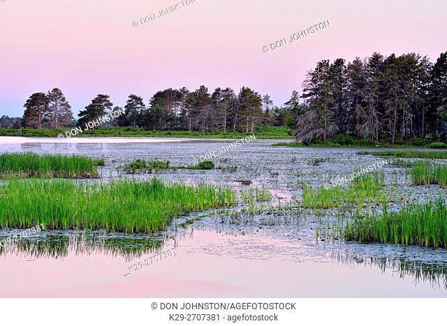 Seney wetlands at dawn in early summer, Seney NWR, Michigan, USA