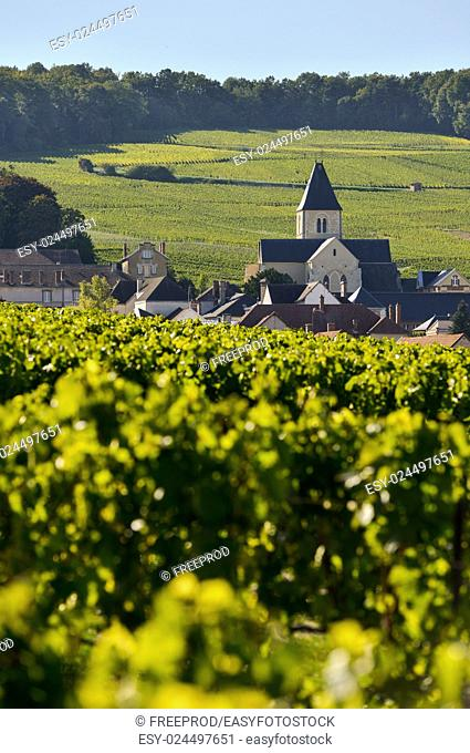 Champagne vineyards and church in Marne department, Champagne-Ardennes, France, Europe