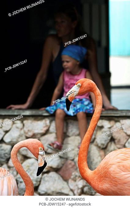 Netherlands Antilles, Curacao, flamingoes at the sea aquarium