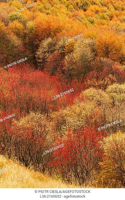 Bieszczady Mountains. Poland. Autumn