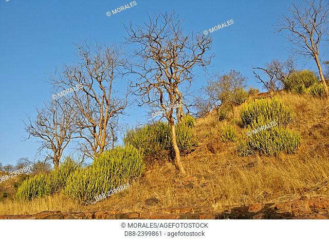 Asia,India,Rajasthan,Ranthambore National Park,landscape