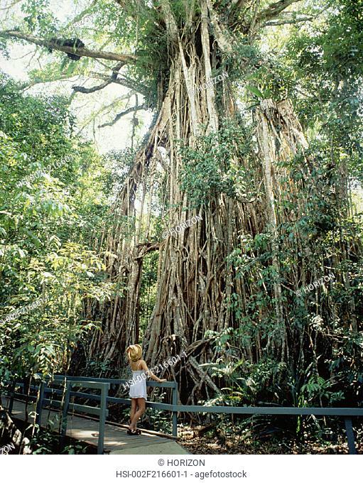 Travel, Australia, Queensland, Atherton Tablelands